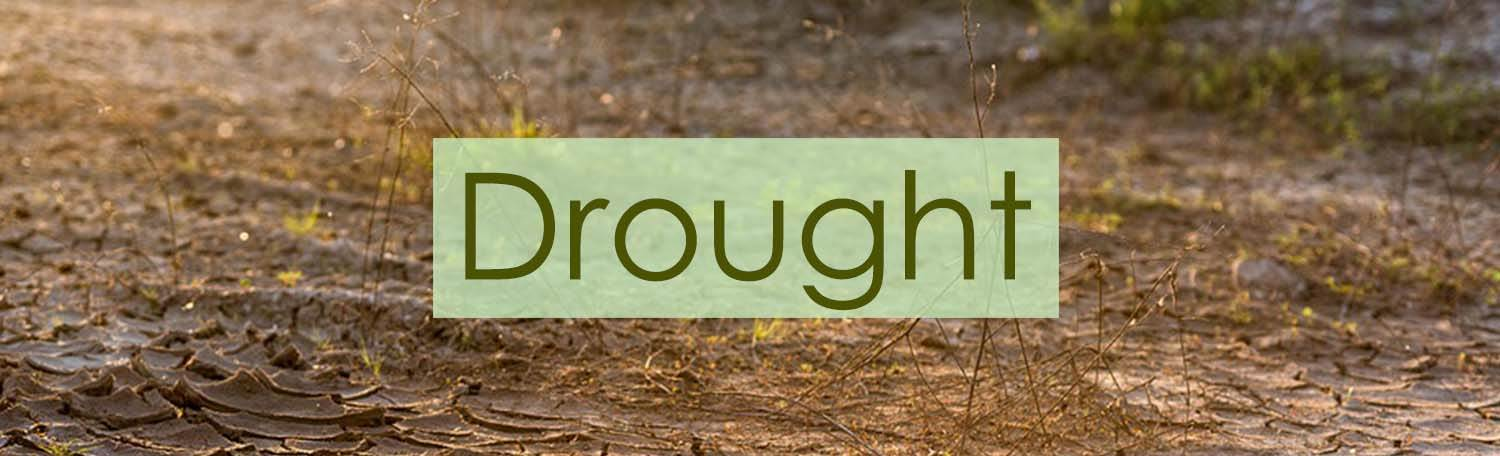 Arborists tips on how to deal with drought | TreeCare
